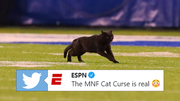 Superstitious Sports Fans Are Loving This Black Cat Curse Article Bardown