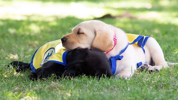 The Chargers Got A Team Puppy And He Is Adorable Article Bardown