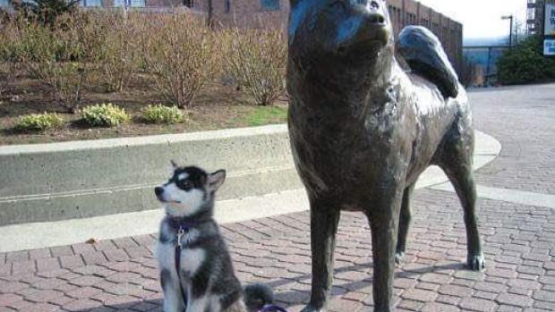 the washington huskies are retiring their husky dog mascot dubs